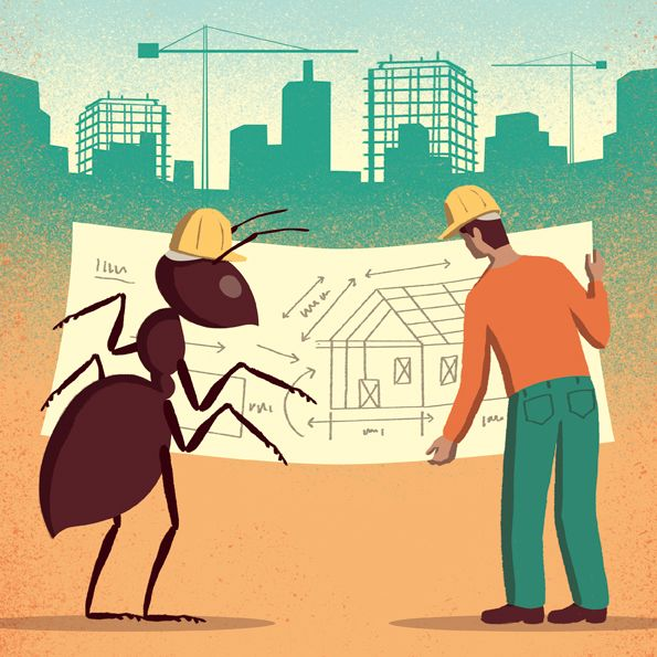 Davide Bonazzi - Lessons of city planning from ants. Client: Science magazine. #conceptual #editorial #illustration #city #urban #ants www.davidebonazzi.com