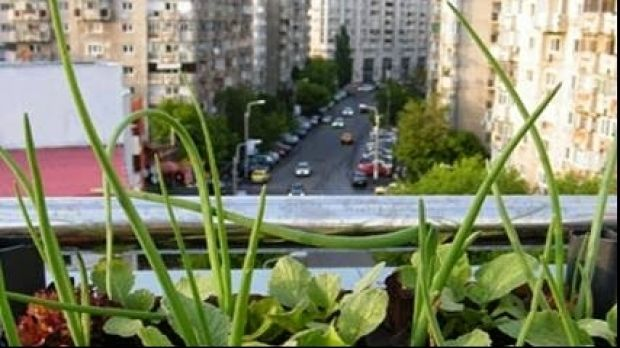 Un grup de voluntari din Bucuresti si-a propus sa îsi produca legumele si fructele chiar pe un acoperis din inima Capitalei. Astfel, sediul Directiei Generale de Asistenta Sociala a Municipiului Bucuresti (DGASMB) este prima cladire a unei institutii publice din Bucuresti pe care exista o gradina cu legume si plante aromate.