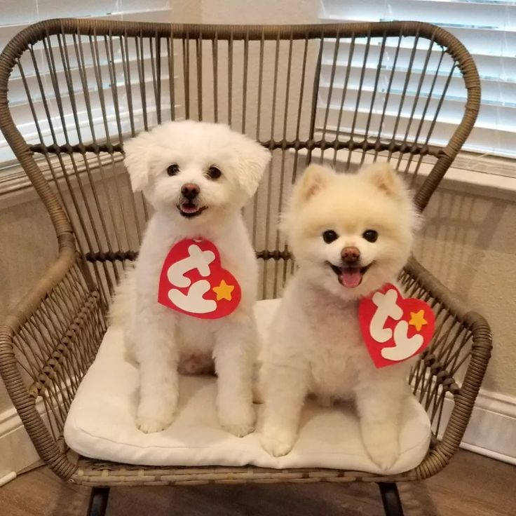 25 adorable diy dog costumes for halloween disfraces