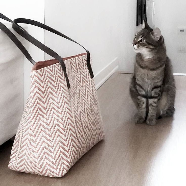 . . . #eqbags #lovebags #monday #model #cat #bag #designbag #homedecor #design #lovecat #velvety #color #summerstyle #faschionblogger #fashion #accessorie #inspiration #instagood #composition #goodmorning