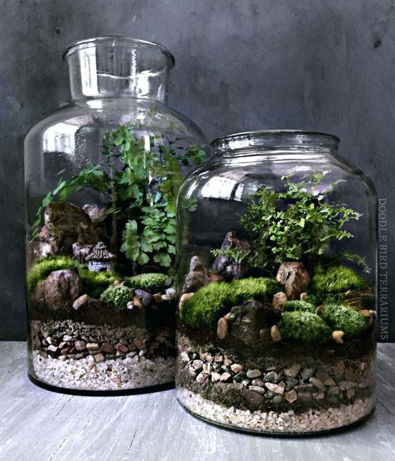 Large Glass Jars Woodland Moss And Fern Terrarium In Large Glass By Large Glass Jars With Lids Ebay Succulent Terrarium Terrarium Jar Terrarium