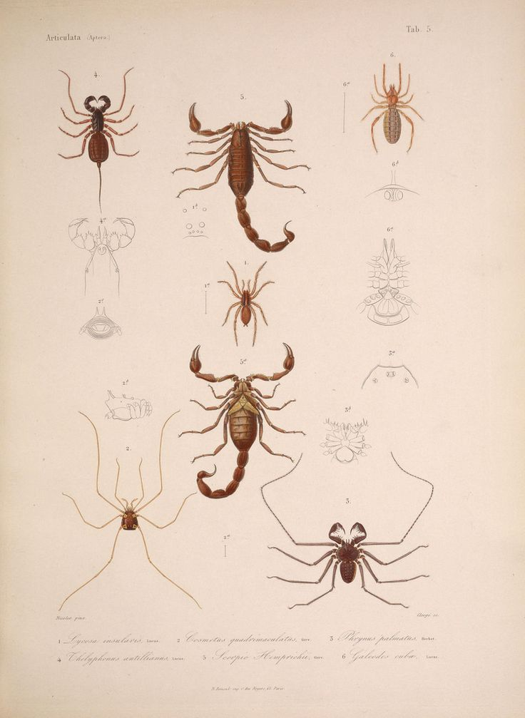 https://www.flickr.com/photos/biodivlibrary/5984240543/sizes/l