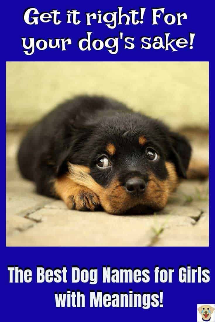 Female Dog Names And Meanings Puppies Names Female Dog Names Best Dog Names