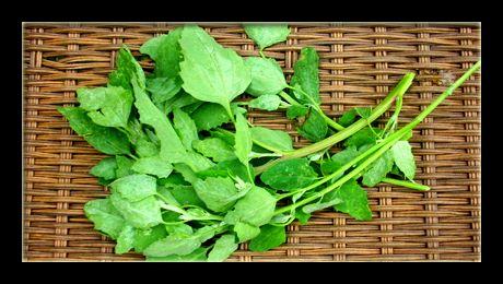 În zilele noastre, considerată mai degrabă buruiană care invadează culturile de cartofi sau alte legume, cunoscută totuși din Antichitate și Evul Mediu ca plantă alimentară, loboda sălbatică mai este cultivată în prezent doar în câteva părți ale lumii, ca legumă verde…