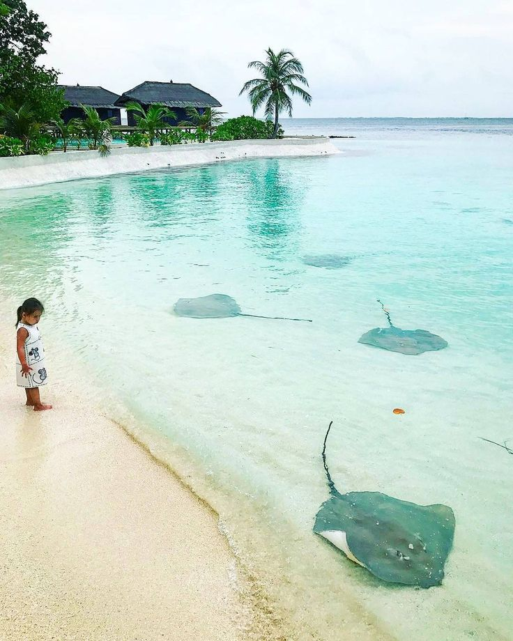 Kawaii Island Go Vacation: 17 Best Ideas About Stingrays On Pinterest
