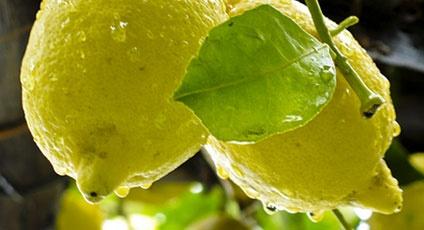 Amalfi Coast taste alphabet on italytraveller.com