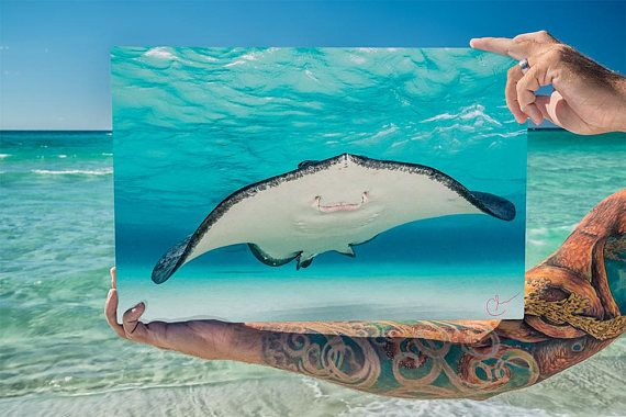 Smiling Ray - A Southern Stingray smiles happily for her portrait against a bright blue backdrop of gentle ocean waves made even brighter by the white sand sea floor. The mouth of a stingray is on the underside of these flat fish so is rarely seen as they swim closely to the bottom