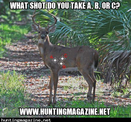 8faf278567aa64c0a397034770299929 deer hunting would you 11 best deer meme's images on pinterest funny stuff, animals and,Funny Deer Memes
