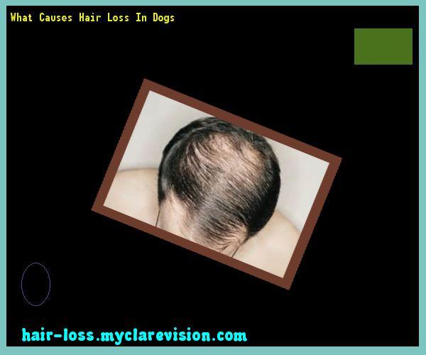 Rottweiler puppy hair loss