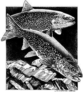 Clear Water Lake - trout