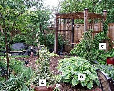 Pictures of flowers: Ivy = A, Hosta = B, Climbing Hydrangea = C: Container Gardening Flowers: Ivy = A, Hosta = B, Climbing Hydrangea = C  The corner of a fenced-in yard can become an intimate, peaceful spot to relax