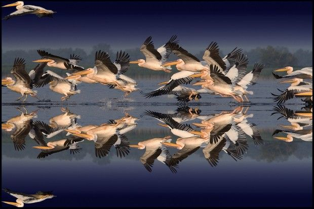 The Danube Delta - http://www.rolandia.eu/offer/amazing-romania/