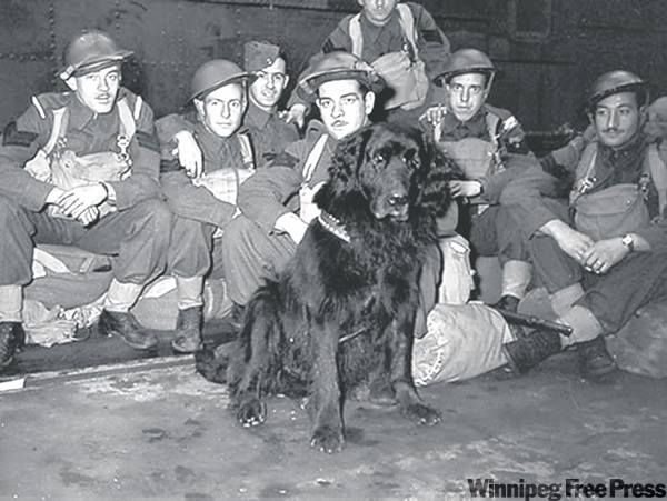 Gander the regimental mascot of the Royal Rifles of Canada departing for Hong Kong in 1941.( Source: Hong Kong Veterans Assn) One night in December 1941, Gander showed his true courage. That night, Gander saw a grenade tossed near a group of wounded Canadian soldiers. He ran to it, took it, and rushed away with it. The grenade exploded and Gander was killed. But he had saved the lives of the seven soldiers who never forgot Sergeant Gander.