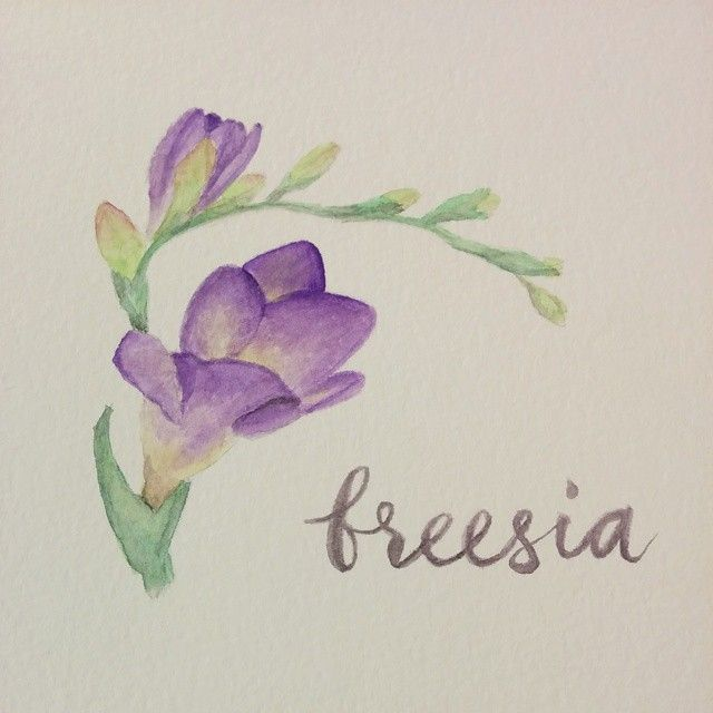 Day 47: Forgot how much I loved purple #purple #freesia #flower #watercolor…