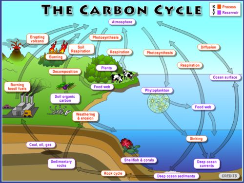 the biogeochemical cycles of earth There are stations around the room that represent earth's carbon reservoirs  is  used when teaching about carbon in fossil fuels and biogeochemical cycles.