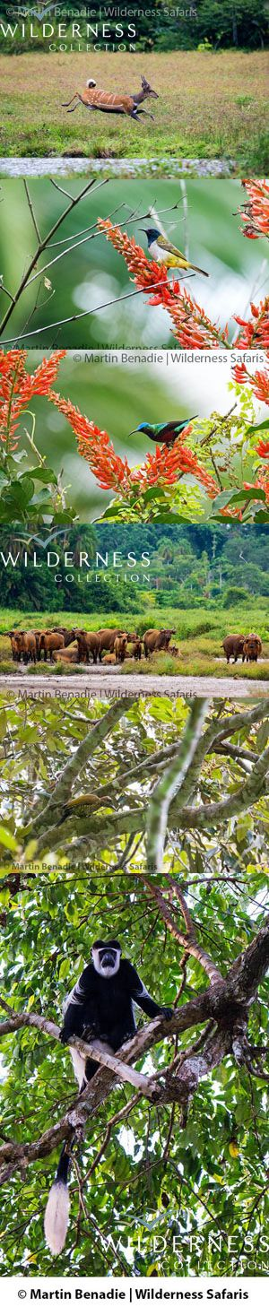 We Are Wilderness - Based here at Lango Camp over the past week I have had a chance to experience a wide range of the immediate area's biodiversity. Click on the image for the full story.