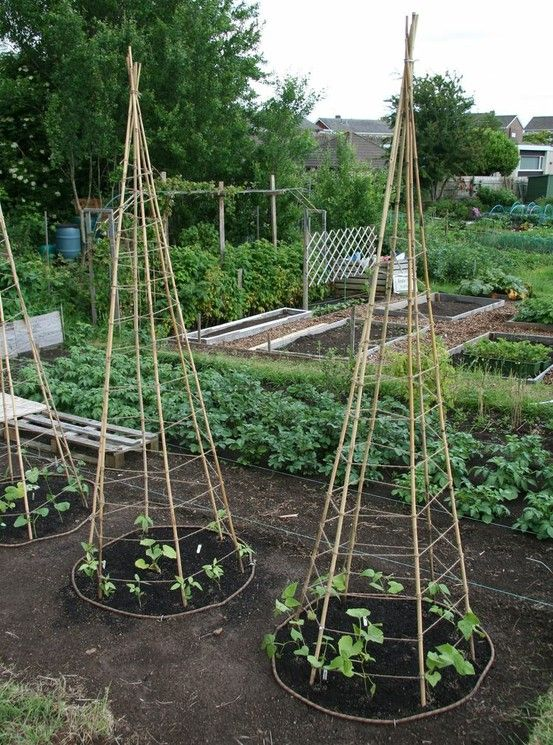 Homestead Survival: 6 Bamboo or Branch Tomato Cages Projects & Videos