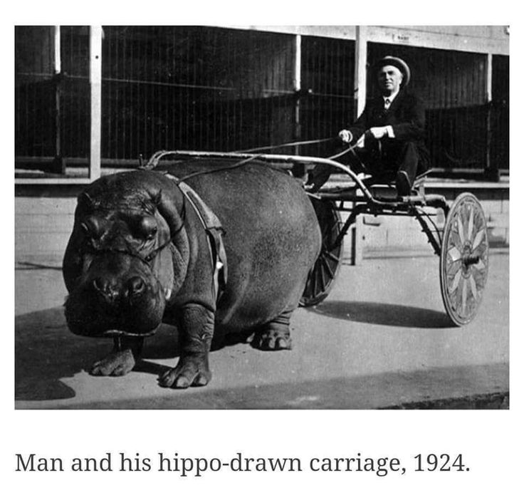 1924 hippo carriage