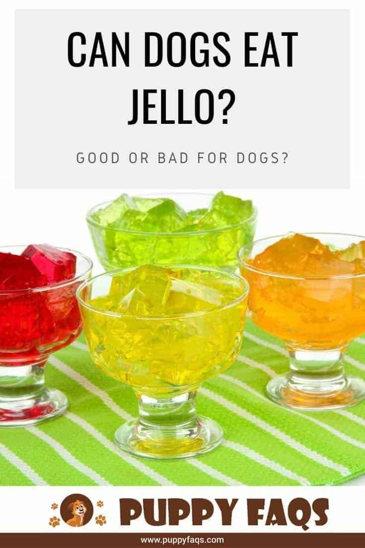 Can Dogs Eat Jello? Good or Bad for