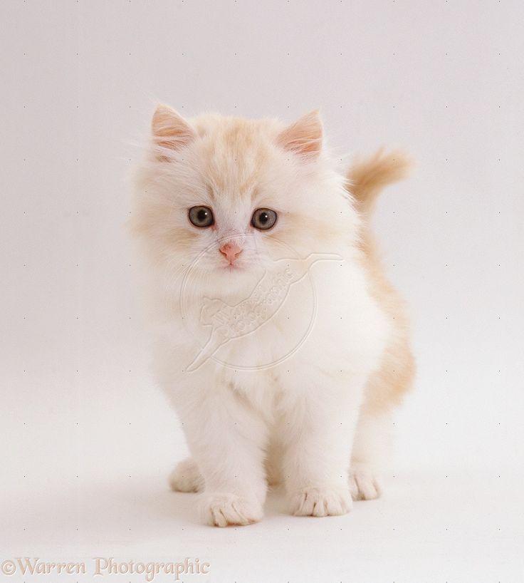 how to make kitten treats