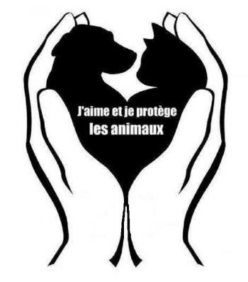 Animaux - Signez la pétition : Non à la diffusion sur le web de maltraitance animale !