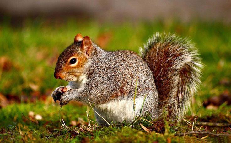 108 Best Wonder Animals ☃ Images On Pinterest
