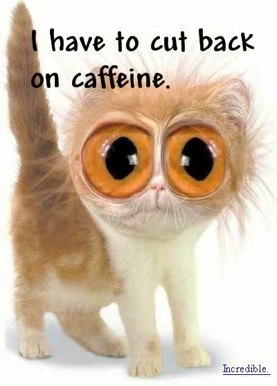 Signs You Drink Too Much Coffee | 8ight |Too Much Caffeine Animal