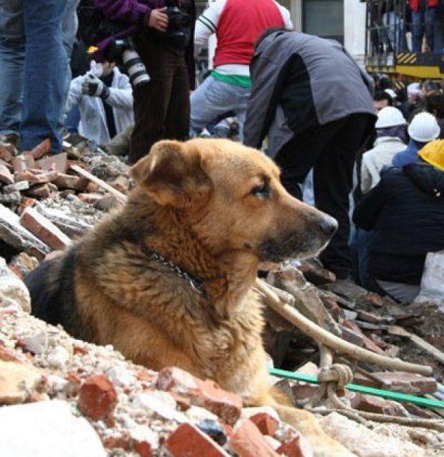 Per alcuni era solo uno dei cani di quartiere che, soprattutto dopo il terremoto del 6 aprile 2009, vagavano per le vie deserte e la macerie del capoluogo