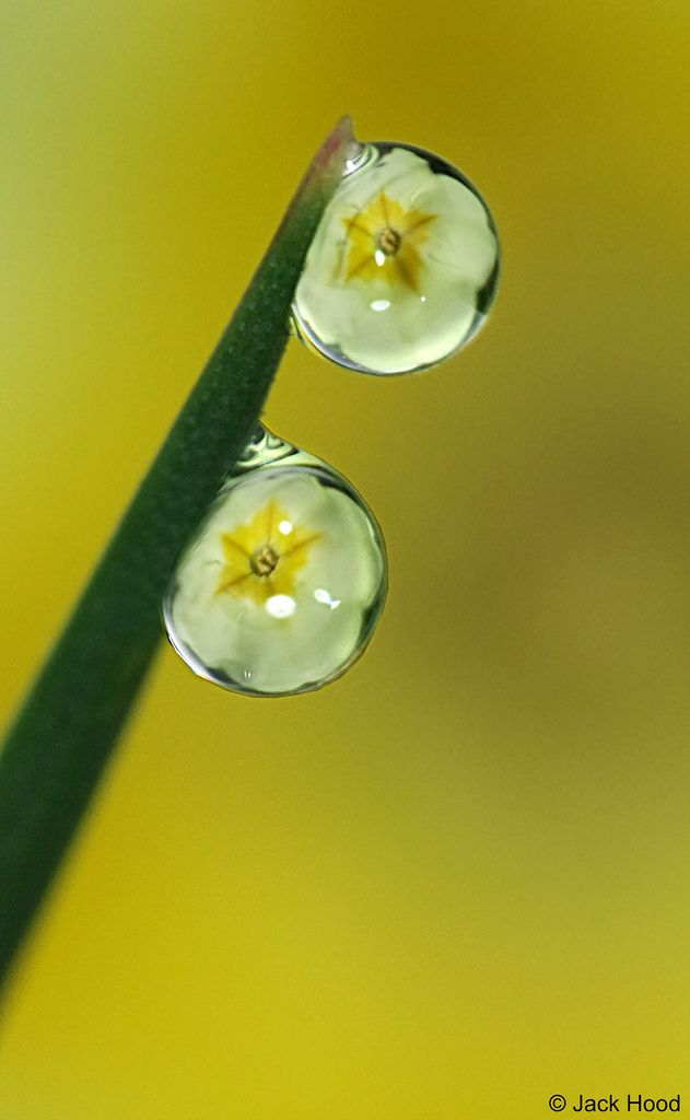 Dew Drops Refraction  | par Jack Hood