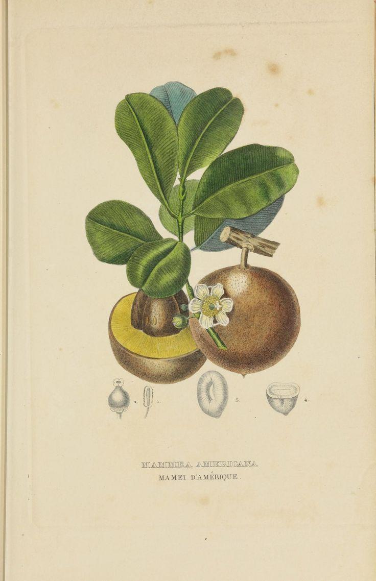 Dictionnaire classique des sciences naturelles :. Brussels :Meline, Cans et Ce.,1853.. biodiversitylibrary.org/page/42266385