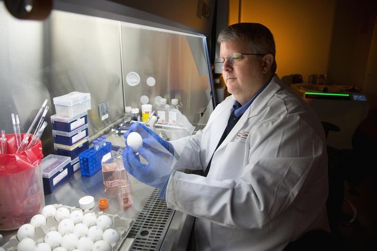 Researchers at the University of Georgia and Sanofi Pasteur, the vaccines division of Sanofi, announced today the development of a vaccine that protects against multiple strains of both seasonal and pandemic H1N1 influenza in mouse models. They published their findings in the Journal of Virology.
