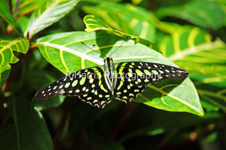 Butterfly on the green leaves