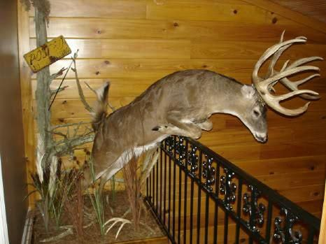 Jumping monster whitetail buck mount!