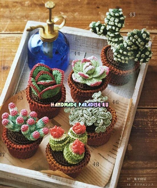 kaktusyi-i-sukkulentyi-kryuchkom-shemyi-2