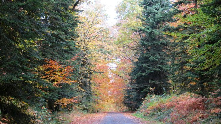 Mireloup, Le Tronchet, Ille-et-Vilaine, Brittany, France | Photo by Ayuna Skol Ofenstrü (November 2013) #automne #autumn #foret #arbres #trees #bretagne