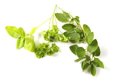 How To Use Oil of Oregano Orally  @livestrong.comOregano Oil, Clinic Evidence, Oregano Danger, Health Benefits, Oregano Oral, Mayo Clinic, Culinary Herbs, Medicine Property, Herbal Medicine