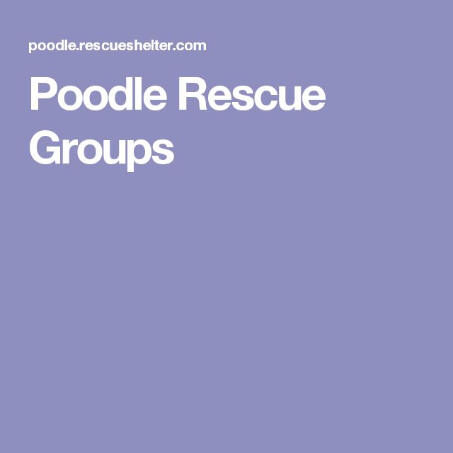Poodle Rescue Groups