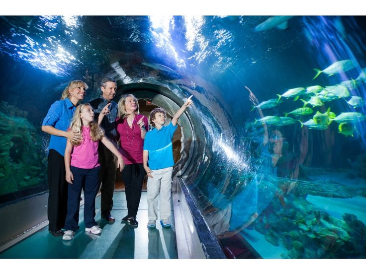 SEA LIFE Orlando Aquarium - Popular Attractions in Orlando, Florida