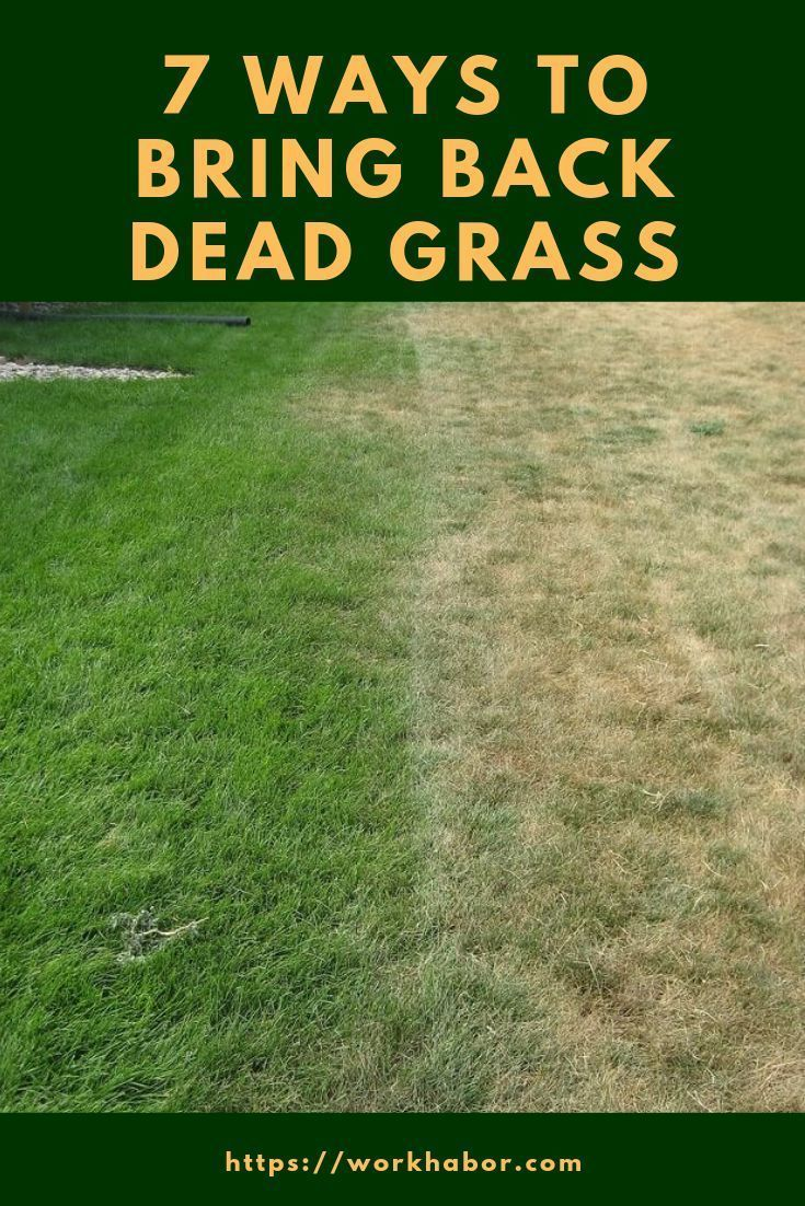 How To Get Rid Of Onion Grass In Your Lawn Grass Wild Onions Gardening Advice