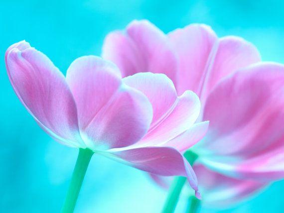 Easter | Pastel Spring Flower Tulip Zen Decor | Fine Art Nature Photography