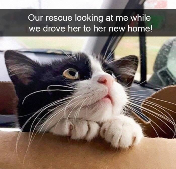 21 Silly Snaps Of Cats Bein Cats Funny Animals Kittens Cute