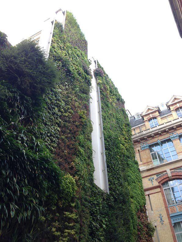 L'immense mur végétal de la rue d'Alsace (Paris 10e)