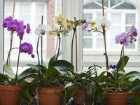 Die 25+ Besten Ideen Zu Orchideen Richtig Pflegen Auf Pinterest ... Hortensien Pflege Lernen Sie Wie Sie Ihre Zimmerpflanzen Pfoegen