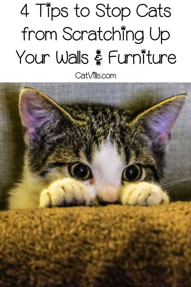 4 Tips To Stop Cats From Scratching Up Your Walls Furniture Kittens Cutest Kittens Funny Kitten