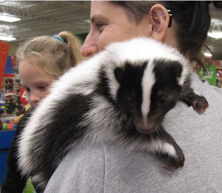 skunks as pets - Google Search