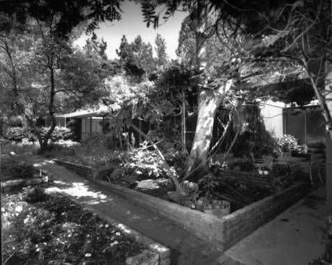 View of a courtyard of the Julius Shulman House and Studio, Los Angeles, 1949-1950 :: Library Exhibits Collection