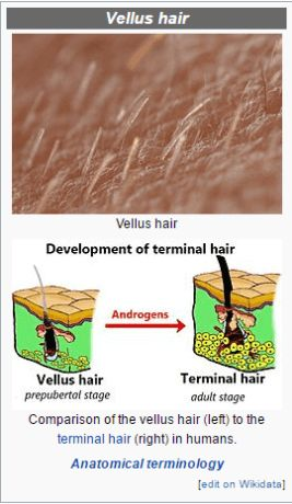 vellus hair and dermaplaning