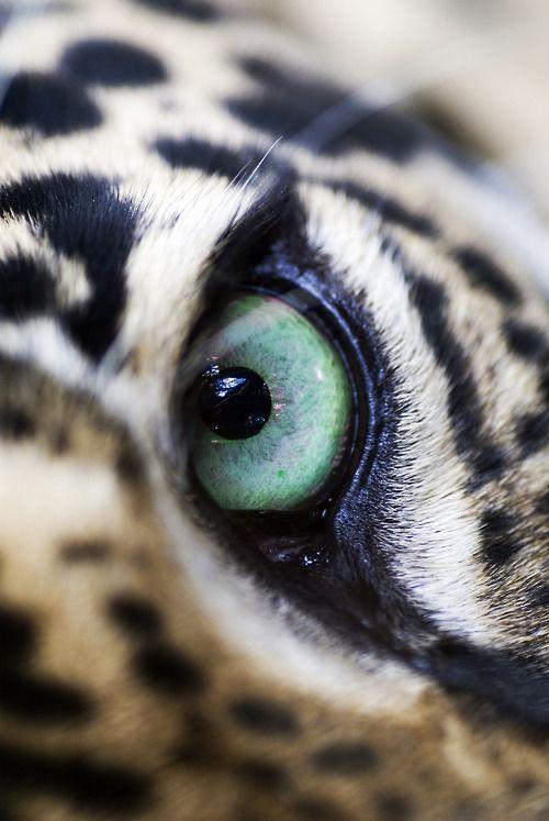 L'émeraude de ses yeux !