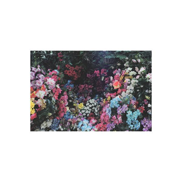 you are at the top of my lungs. found on Polyvore: Photos, Pics, Backgrounds, Lungs, Fillers, Flowers