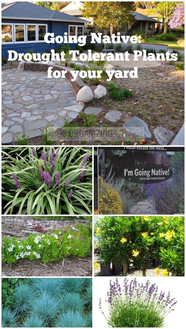 Just because you don't have a lot of rain doesn't mean you can't have a garden. Going Native: Drought Tolerant plants for your yard :: OrganizingMadeFun.com